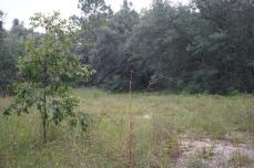Turpentine Camp Site