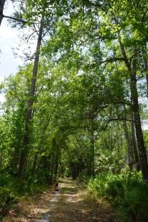 Old Logging Road