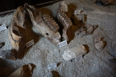 Ancient Fossils Discovered in Bone Valley