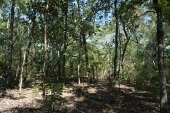 Woods at Andrews WMA