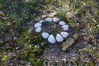 Shells on Grave
