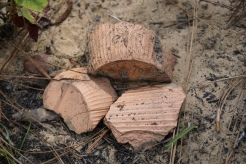 Herty Cup Fragments