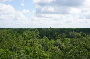 View of Forest from top of Fire Tower