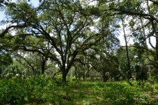 Triple N Ranch WMA
