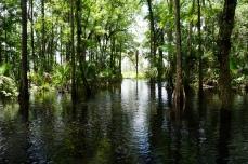 Crabgrass Creek