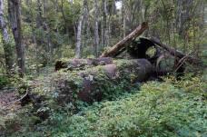 Remains at Phosphate Mine