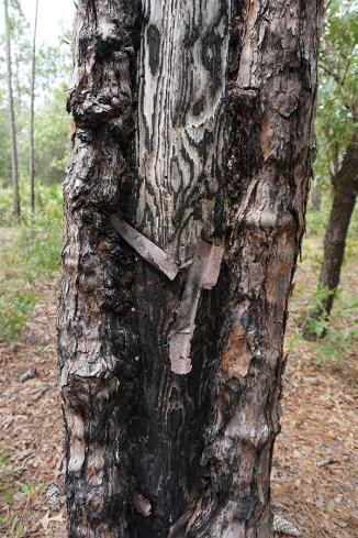Catface Tree