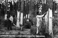 Turpentine Workers