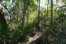 Wilderness by the Thomas C. Fillyaw Gravesite in Ocala National Forest