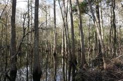 Swamps by Gordon Grade