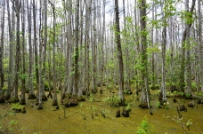 Swamps by Homestead Site