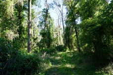 Road to old Homestead
