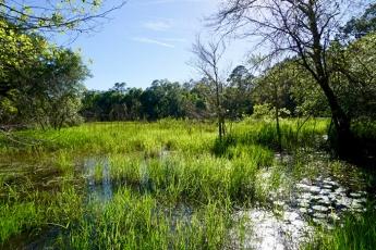 Pond by Homestead Site